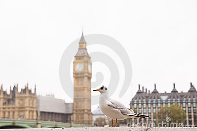 Seagull and a Big Ben