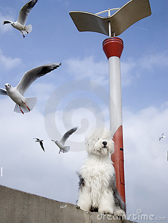 Seagull bird and dog