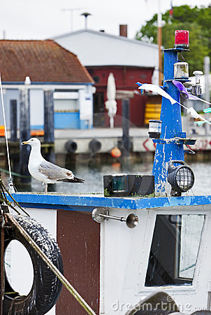 Seagull on cabin of fisherboat