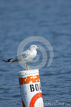 Seagull on a Channel marker