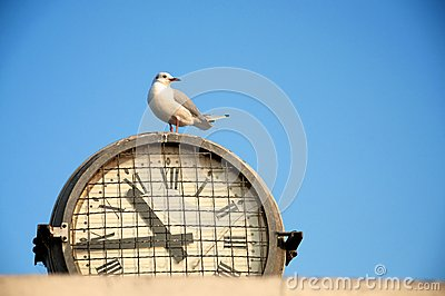 Seagull on a clock