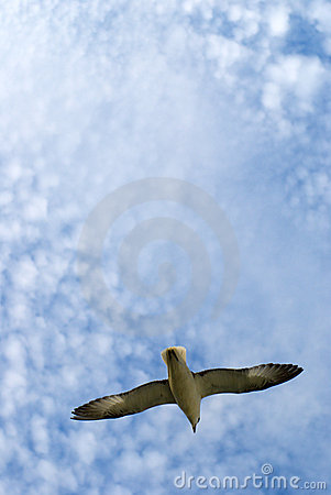 Seagull, clouds and daylight