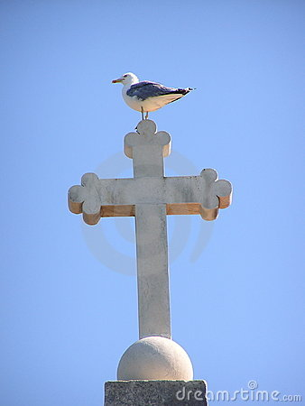 Seagull on cross