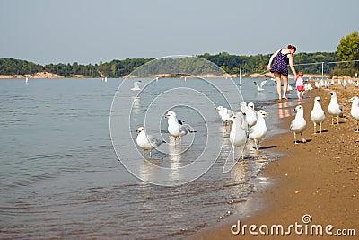 Seagull Family Beach Walk