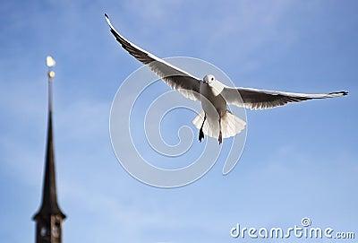 Seagull in fight