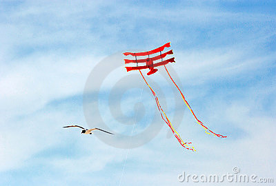 Seagull and flying kite