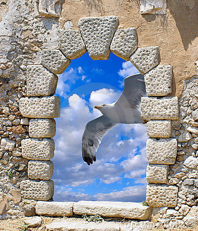 Free Seagull Flying On Blue Sky Royalty Free Stock Photo - 19777435