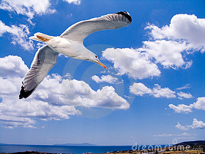 A seagull flying over the Aegean