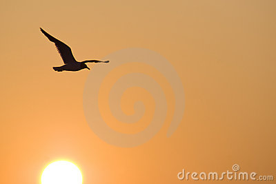 Seagull flying over the sun at sunrise