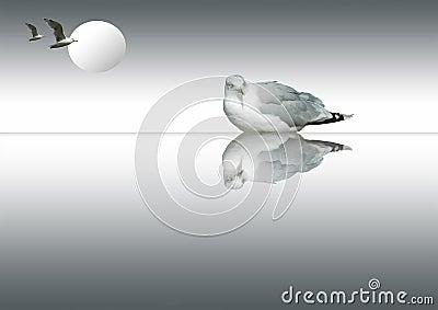 Seagull harmony