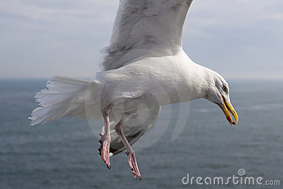 Seagull Holding Food