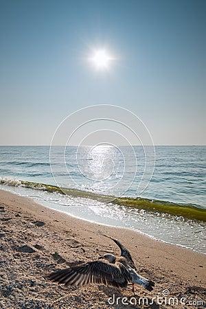 Seagull i słońce