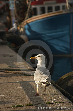 Free Seagull In Harbour Stock Images - 773384