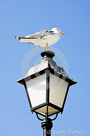 Seagull on lamp.