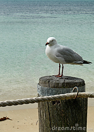 Free Seagull & Ocean Stock Photography - 14315122