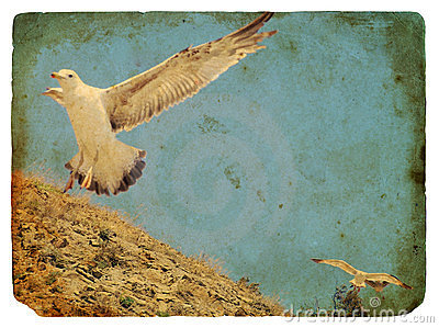 Seagull. Old postcard.