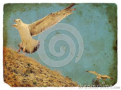 Seagull. Old postcard.