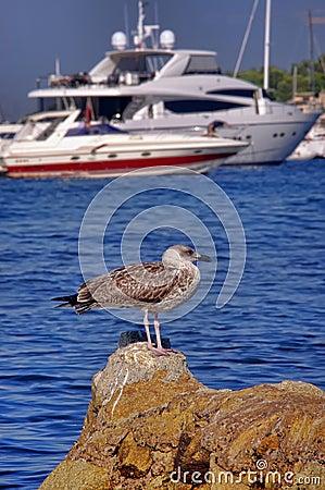 Seagull på strand