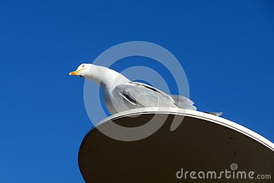 Seagull On Perch