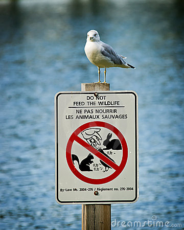 Seagull Perched Atop Do Not Feed Wildlife Sign
