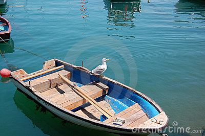 Seagull on a rowboat
