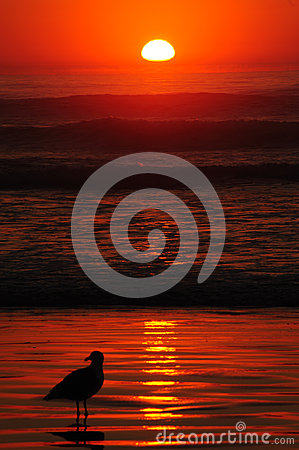 Free Seagull S Red Sunset At Newport Stock Photography - 27479952