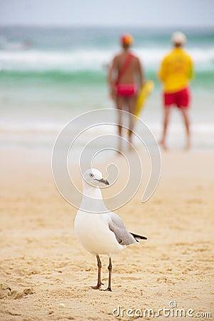 Seagull on  sand on the beach