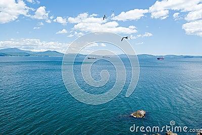 Seagull & sea