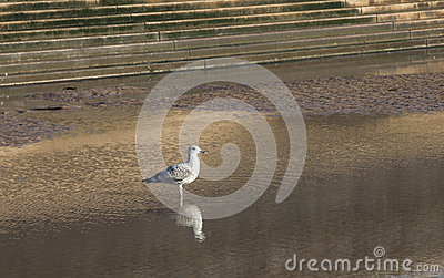 Seagull on sea front