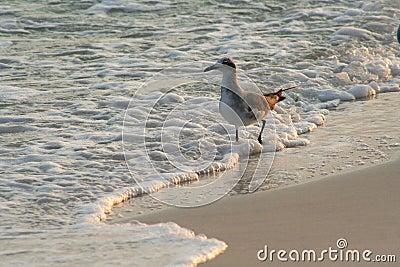 Seagull at Seashore