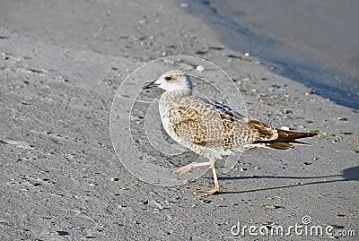 Seagull on shore