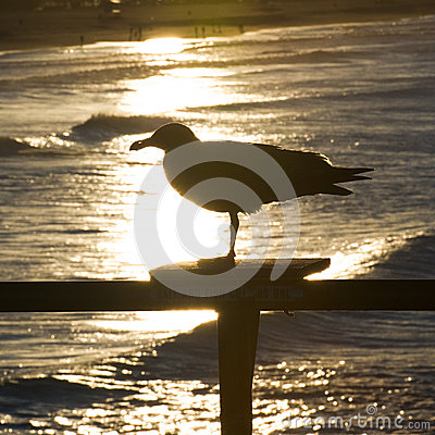 Free Seagull Silhouette Stock Photos - 24885833