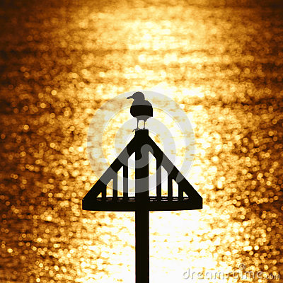 Free Seagull Silhouette Against Golden Sunset Royalty Free Stock Images - 36529139