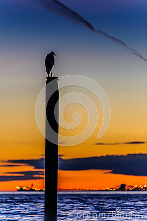 Free Seagull Silhouette Resting On A Post At Sunset Royalty Free Stock Photo - 76760615