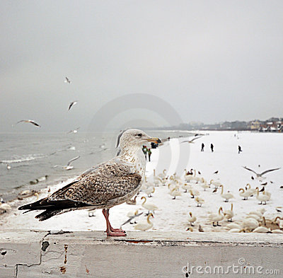 Seagull sitting on wooden bord
