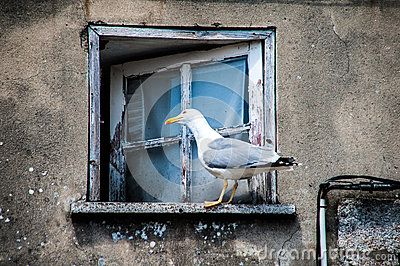 Seagull in window