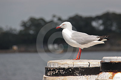 Seagull standing on a pier