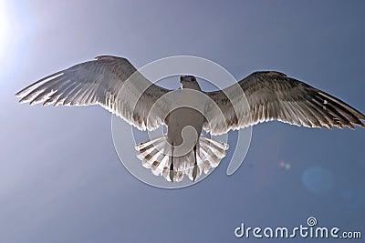 Seagull in the sun