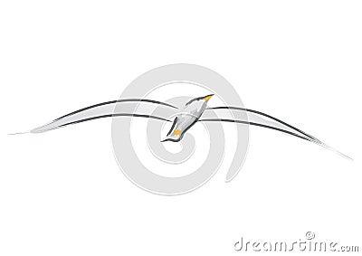 Seagull (vector)