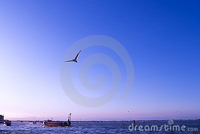 Seagull In Venice Royalty Free Stock Photography - Image: 11765397