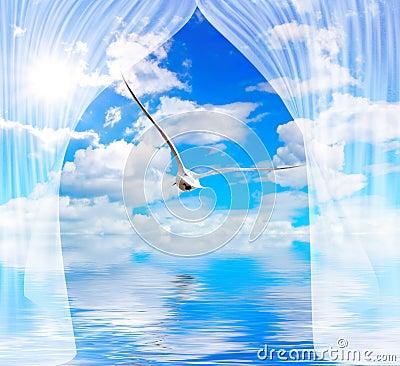 Seagull water and sun through curtain