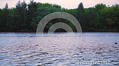 Seagulls στον ποταμό απόθεμα βίντεο