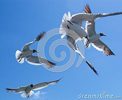 Seagulls #1 Stock Photo