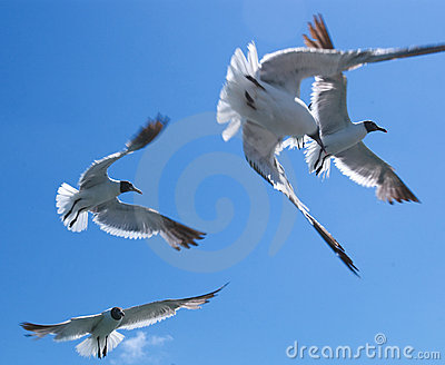 Seagulls #1