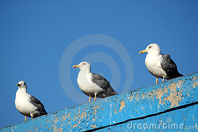 Seagulls Stock Photography - Image: 23801292