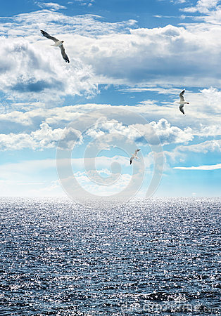 Free Seagulls Stock Photo - 45518620