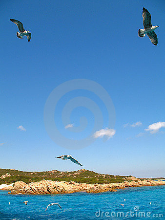 Free Seagulls And Sea Stock Images - 1395864