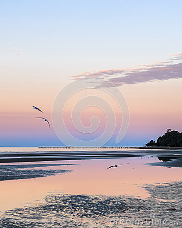 Free Seagulls At Dusk On The Coast Stock Images - 53089034