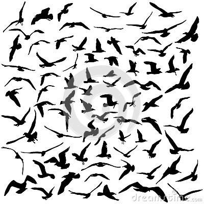 Free Seagulls Black Silhouette On White Background. Vector Stock Image - 51170481