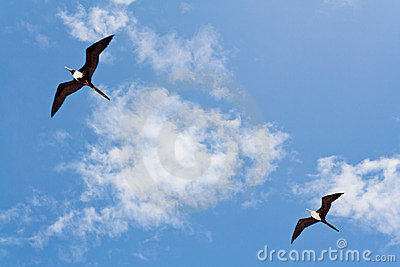 Seagulls on a Blue Sky